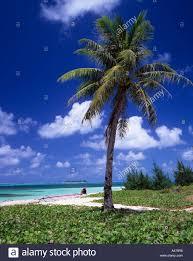 micro beach and coconut palm tree saipan sky clouds sea horizon
