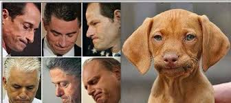 Frowning Dog Meme - ken playlist 09 october 2013