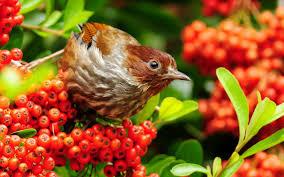 desktop love birds wallpaper download