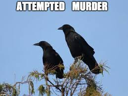 Attempted Murder Meme - ooohhhh now that s a bad animal pun imgflip