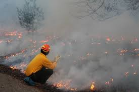 Wildfire Training by Aedc Natural Resource Managers And Partnering Agency Take Part In