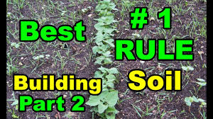best 1 tip for building soil for all vegetable gardens u003d deep