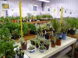 native plants extension master gardener master gardeners u2013 dodge county