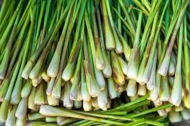 herbe cuisine herbe à citron cuisine aux huiles essentielles bio