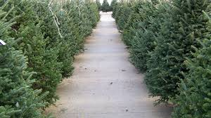 christmas tree sale hospitality ministries annual christmas tree sale on now