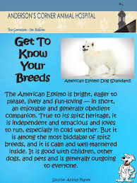 is a american eskimo dog right for me 3052 best american eskimo spitz images on pinterest japanese