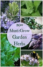 best 20 herb planters ideas on pinterest growing herbs must grow kitchen garden herb plants the ultimate growing top