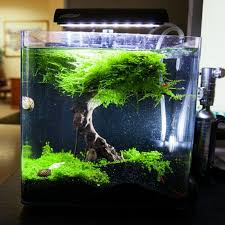 Aquascape Filter Best 25 Nano Aquarium Ideas On Pinterest Betta Aquarium