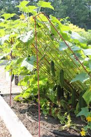 cucumber trellis large powder coated steel gardener u0027s supply