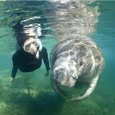 Florida snorkeling images 10 top spots to snorkel coastal living jpg