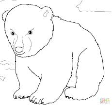 pourapp page 9 polar bear coloring sheets bear color page kids