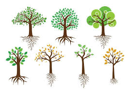 green tree with roots vectors free vector stock