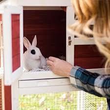 Rabbit Hutch For 4 Rabbits Amazon Com Advantek The Stilt House Rabbit Hutch Garden U0026 Outdoor