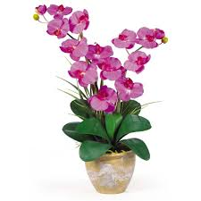 nearly natural 25 in double phalaenopsis silk orchid flower