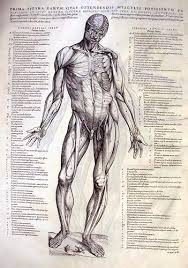 Full Body Muscle Anatomy 69 Best Anatomy Medical Scientific Illustration Images On