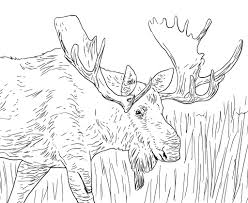 alaska coloring pages getcoloringpages com