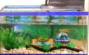 decor how to decorate aquarium decoration ideas cheap marvelous