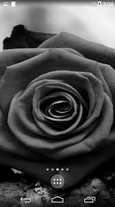 Black Rose Flower Black Rose Live Wallpaper Android Apps On Google Play