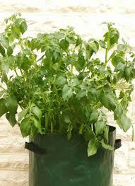 Patio Potato Planters Potato Patio Planters Archives Love To Grow