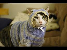sweaters for cats cats wearing sweaters cfs