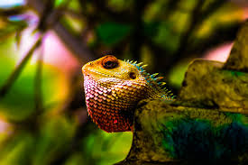 download wallpaper iguana reptile scales color hd background