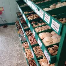 Where To Buy Seashells She Sells Sea Shells 51 Photos U0026 28 Reviews Flowers U0026 Gifts