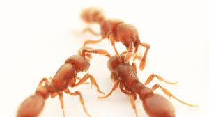the secret lives of ants u2014 nova next pbs