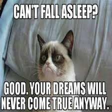 Grumpy Cat Sleep Meme - 100 best grumpy cat images on pinterest funny stuff funny things