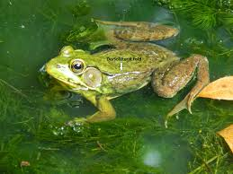 happy picture of a frog for kids book ideas 6093 unknown