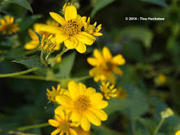 native plants to texas texas native plants week my gardener says u2026