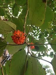 tree with orange spiky