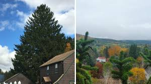 rockefeller center christmas tree hails from oneonta new york