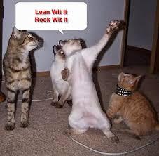 Cute Cat Meme Generator - bogel funny pictures funny cat memes