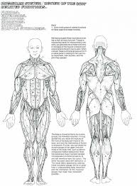 muscular system kids worksheets identifying muscles coloring