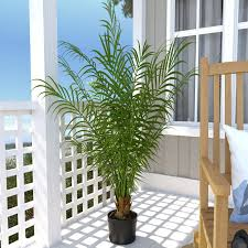 Palm Tree Runner Rug Beachcrest Home Silk Areca Palm Tree In Pot U0026 Reviews Wayfair