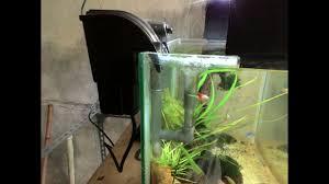 membuat aquascape bening tips cara memasang skimer hang on aquascape agar mengikuti level air