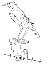 western meadowlark kids stuff coloring page