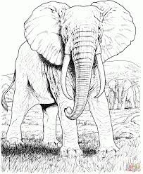 coloring african animals coloring pages free printable pictures