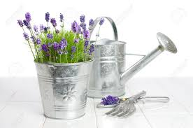 watering cans metal images u0026 stock pictures royalty free watering