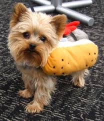 Halloween Costumes Yorkies Dog Halloween Costumes Yorkshire Terrier Yorkie Puppies Dog