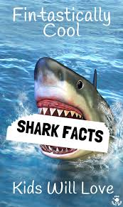 cool shark facts kids will love kids craft room