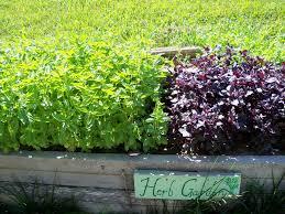michigan native plant nursery sunsugar nursery llc u2013 reaching for the sun in quality plants and