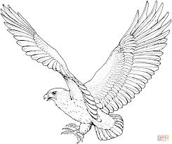 red tailed hawk clipart flight drawing pencil and in color red