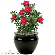Fake Plants Artificial Flowers U0026 Plants Fake Plants Silk Plants Windowbox Com