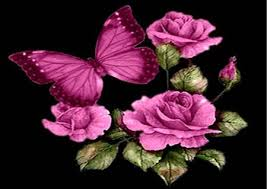 pictures of roses and butterflies butterfly and roses pink