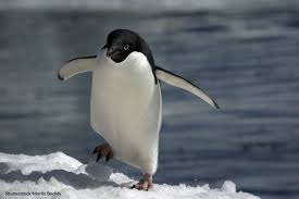 creature feature can you name that mystery penguin oceana