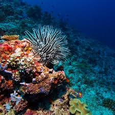 how will ocean acidification impact marine life eurekalert