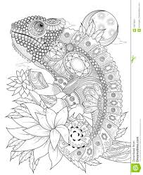 chameleonb coloring page stock illustration image 70974624