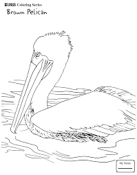 coloring pages toco toucan birds recent coloringbooks7 com