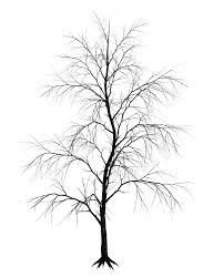 dark trees png stock 09 by roy3d on deviantart